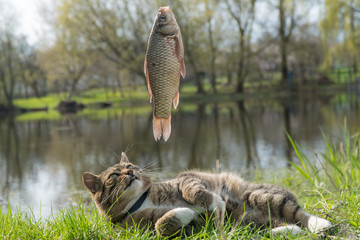 cat fishing. catch fish. Côte looks at fish. © Ирина Бельдий