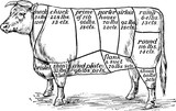 The names and  prices of various cuts of beef - vector illustration