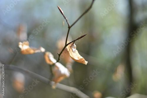 canvas print picture Blätter an einem Zweig