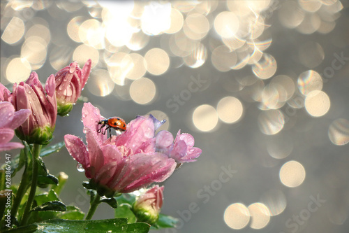 Spring blurred background with first flowers and ladybug, abstract first flowers on bokeh background at sunset. - 262867547