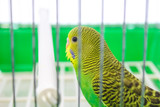 beautiful happy parrot in a cage in the background
