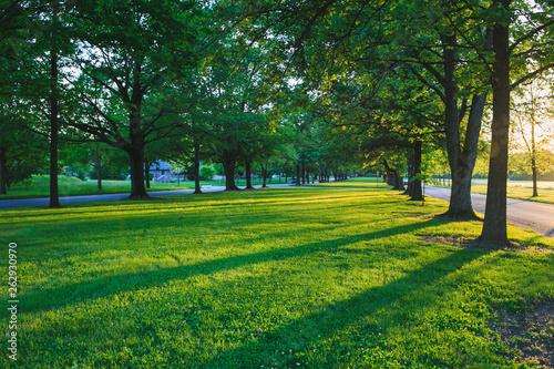 canvas print picture sunshine sidewalk tree