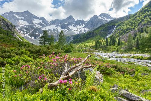 canvas print picture Sommer in den österreischischen Bergen