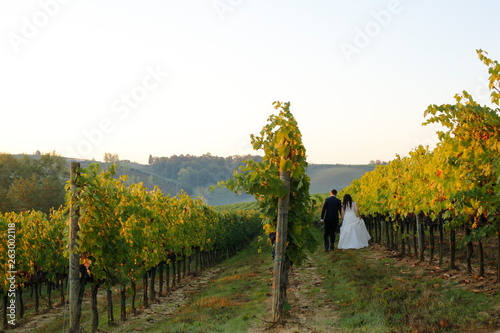 Beautiful wedding couple posing in vineyard