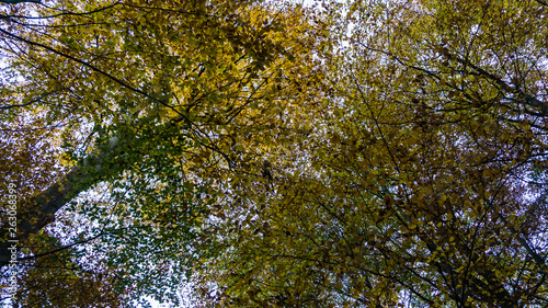 canvas print picture tree tops in autumn