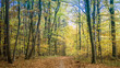 canvas print picture - forest landscape in autumn