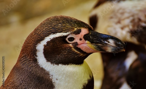 Fototapeten Pinguine Very beautiful animals