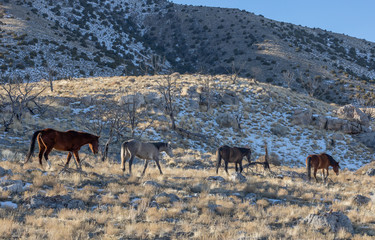 Wild Horses in Winter int he Utah desert © natureguy
