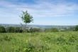 Un prato verde con un albero solitario - 263103583