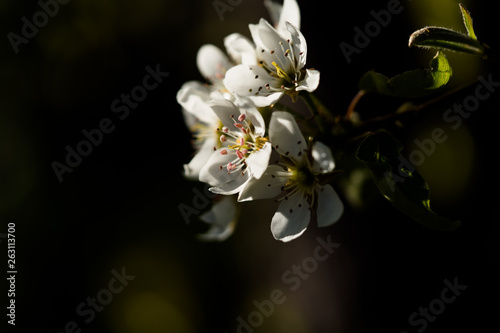 Leinwanddruck Bild In Blütenstimmung