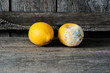 canvas print picture - Fresh and rotten lemon. fruit with mold on wooden background