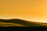Sunset above the large yellow colza field