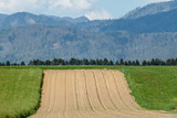 beautiful Alps over green field and village landscape
