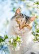 Leinwandbild Motiv Funny red cat on the background of a blooming spring garden