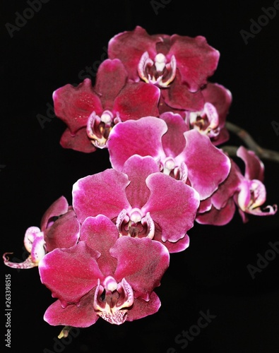 Delicate and refined flower - the Orchid! - 263398515