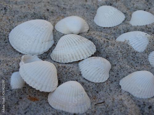 canvas print picture Muscheln im Sand