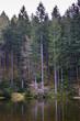 canvas print picture - Waldteich bei Hinterzarten