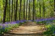 Wald der blauen Blumen - 263449157