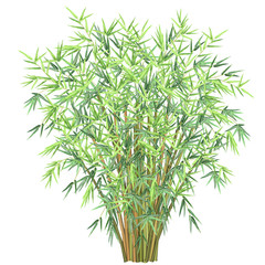 Bamboo. Realistic vector illustration of bunch of bamboo branches isolated on white background. © Татьяна Любимова