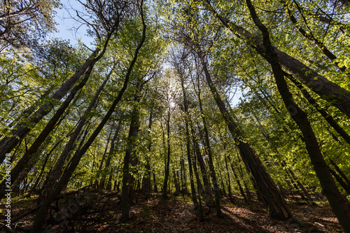 green spring forest ,fresh green color