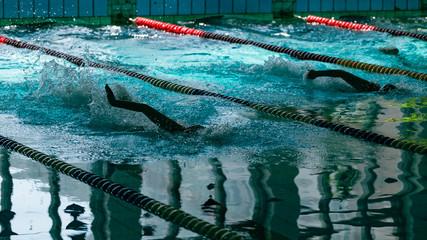 Swimming crawl in the sports pool