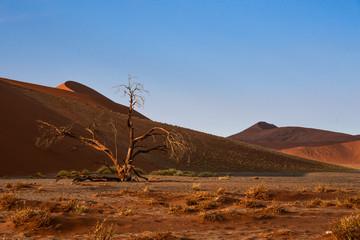 Düne 45 in Sossusvlei, Namibia im Morgenlicht
