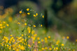 canvas print picture - Meadow with flowers