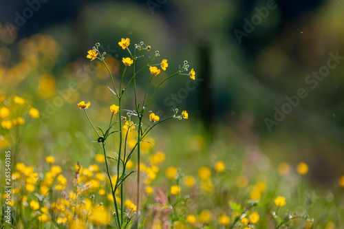 canvas print picture Meadow with flowers