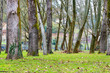 canvas print picture - Urban forest in a park in the province of Ourense, in Galicia (Spain)