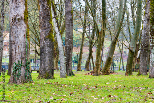 canvas print picture Urban forest in a park in the province of Ourense, in Galicia (Spain)