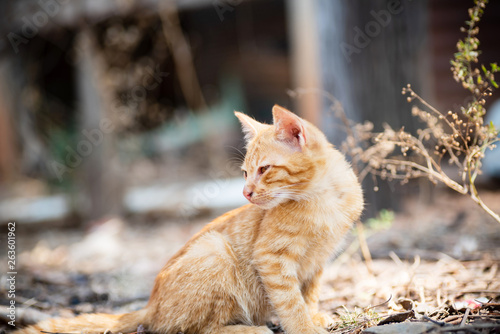 Cute ginger cat sitting on the ground in outdoors