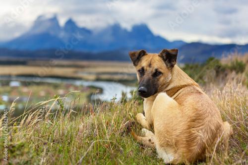 Dog © Galyna Andrushko