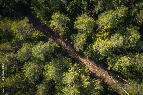Road in green forest aerial view