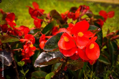 Flor © Juanmanuel