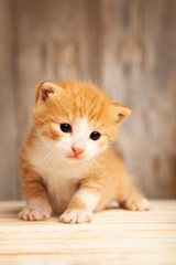small ginger kitten on background of old wooden boards © Chepko Danil