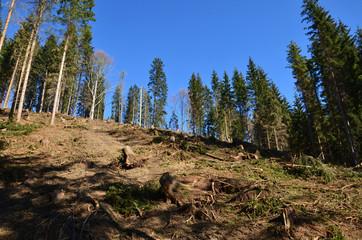 windwurf, schaden im Wald