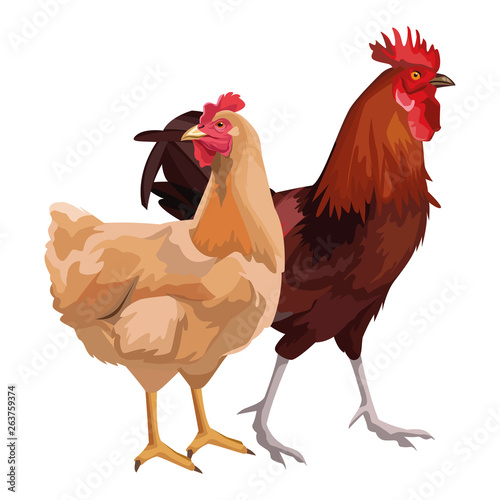 hen and rooster © Jemastock