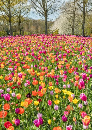 Tulipes Keukenhof © Bernard