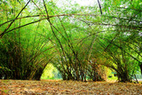 Bamboo trees green nature beautiful landscape