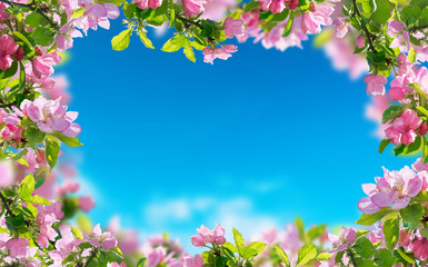 a spring flowers background, pink blossoms trees