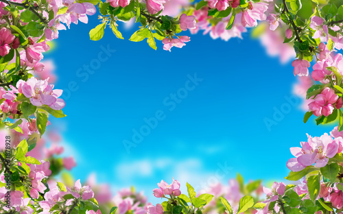 a spring flowers background, pink blossoms trees © andreusK