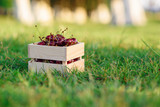 Wooden box with fresh ripe cherry on green grass at sunset.