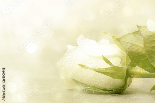 White rose with bokeh on light background, vintage postcard imitation, copy space, selective focus