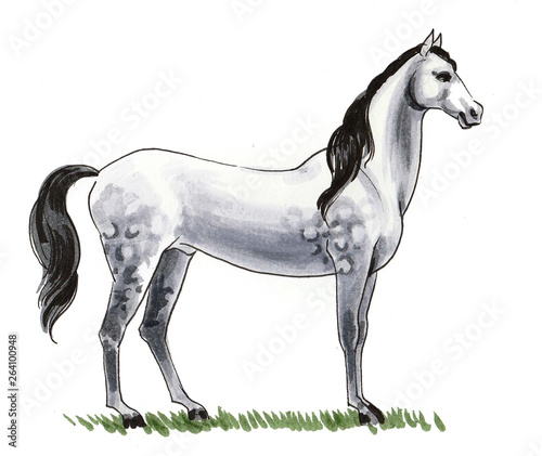 Beautiful white horse. Ink and watercolor illustration