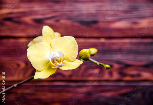 A branch of yellow orchids on a brown wooden background
