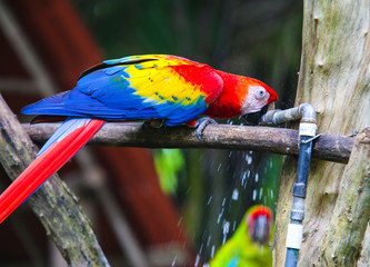 Parrot and other exotic birds