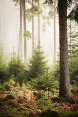 Morgennebel im Kaufunger Wald
