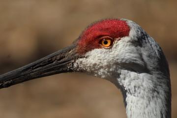 Crane Head 2