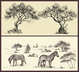Nature banners set. Trees arch and savanna landscape with zebra