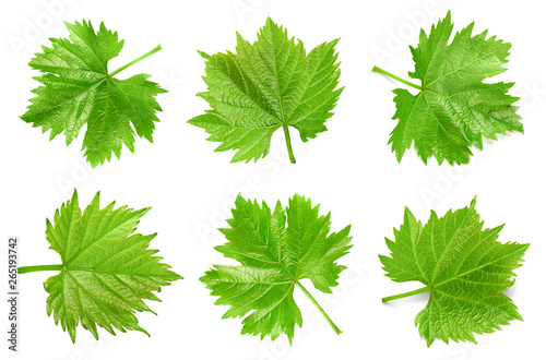 Grapes leaf isolated on white © atoss